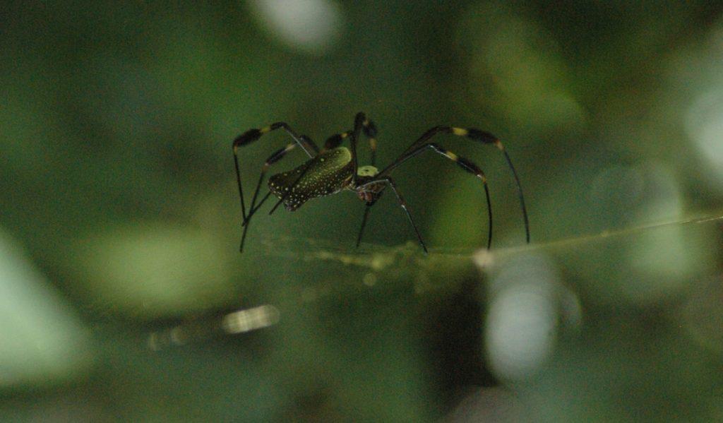 Det fins ikke bare fargerike aper og fugler i regnskogen. Også de mer ekle krapilene blir større knasjere og mer eksotiske.