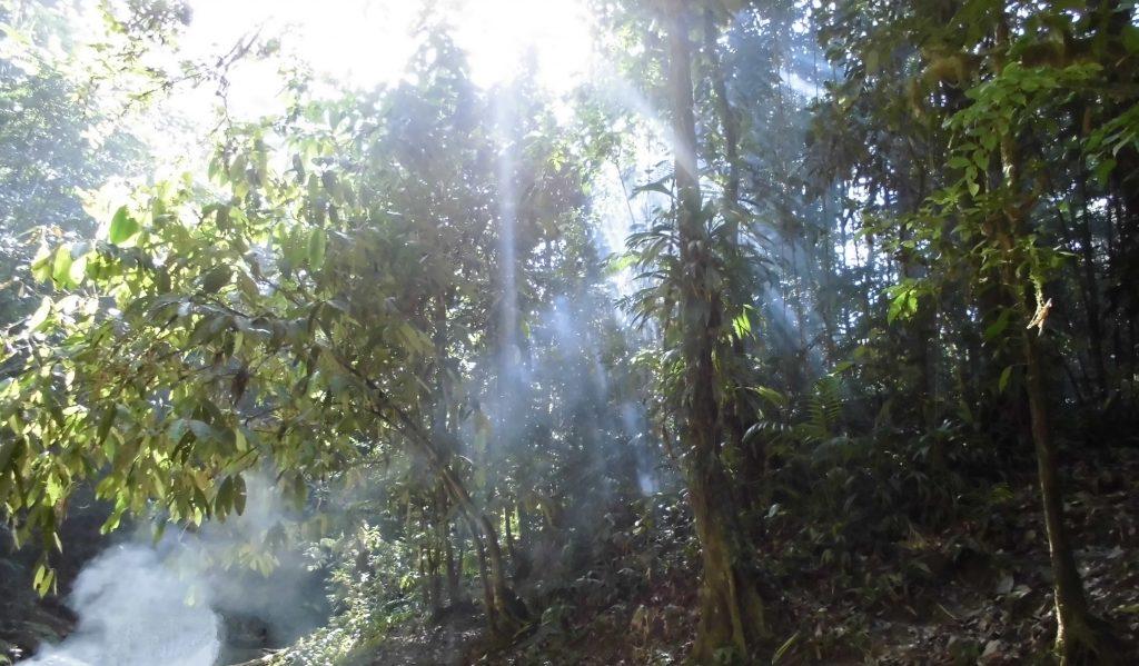 Regnskogen kan by på stemningensfulle og magisk øyeblikk men når panteren lurer i buskene er det best å skygge banen.